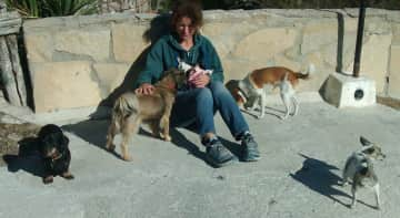 Regularly pet sitting a doggy gang in southern Spain(seven times now)And helping out in the rescue kennels there.