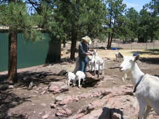 Playtime with the goats