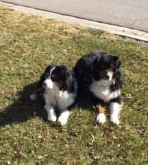 My favorite Aussies, Aly and Maxwell, best friends forever