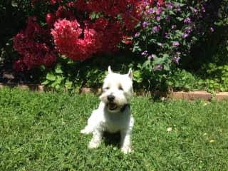 Fergus enjoying spring sunshine in the garden