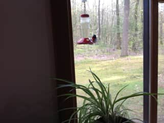 This is a grosbeak at one of many bird feeders at our house.