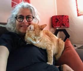 Garfield in Guanajuato