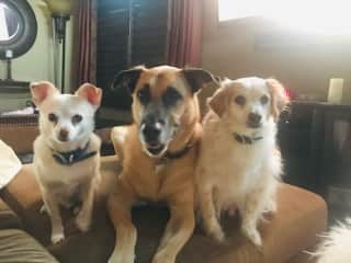 All Three Pups