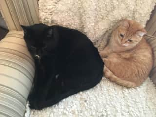 both cats chillaxing