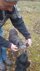 Richard and Peanut truffle hunting