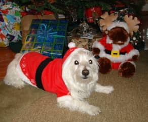 CASEY @ XMAS! Our second rescue - he's now passed on over the rainbow bridge... and one of the reasons we look forward to caring for other furry four legged friends during our upcoming housesitting gigs!