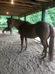 Emmy is my Quarter horse mare and thats the mini (Mira in the background