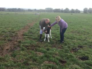 Judy comforting a newborn calf
