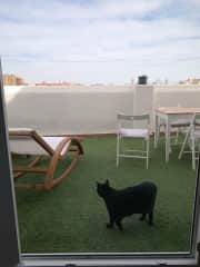 Jack showing you entrance onto the terraza.
