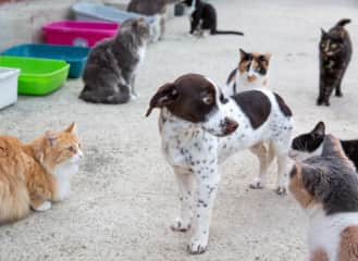 We volunteer at a dog rescue and a cat sanctuary