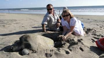 Sea Turtle Nicaragua