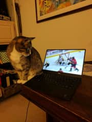 Even our cat loves hockey!