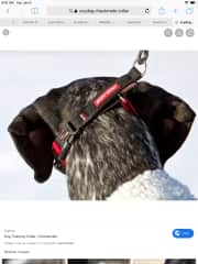 Example of how to put on the walking lead collars