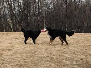 Tucker & Cleo in the back yard