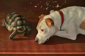Rulon the tortoise with a visiting friend's dog