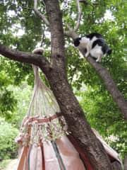 Kitty still likes to climb the occasional tree
