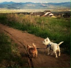 Sophie and Rascal out for an afternoon walk in the hills behind the house.