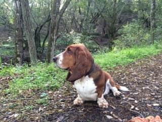 our Granddog- Hank