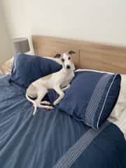 Even though Tony has his own bed to sleep in, you may find yourself sharing the bed with him on those cold mornings.