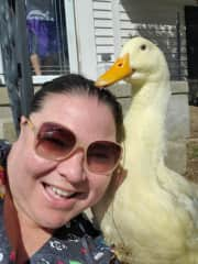 Yep, I'm a crazy duck mom.  Meet PJ.  He is a house duck and lives indoors with us!