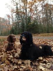 Reggie (brown) Daphne (black)