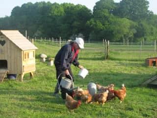 Bill feeding the chooks in Pewsey UK