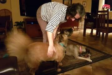 petsitting in San Diego, California - Delphine, Barney and Maggi
