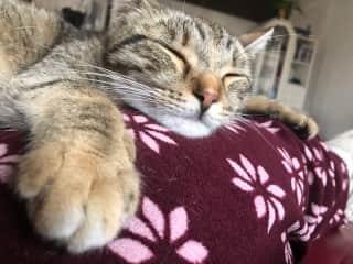 Zinzi having a nap