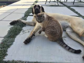 Elsa and snowball the dogs and cats sleep together at night