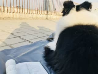 my reading time with Leo