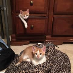Fun with fostered kittens