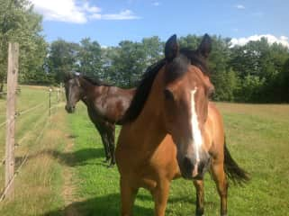 Horses we rescued.