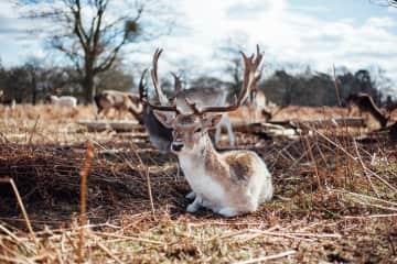 Photography of deer in Bushy Park, London