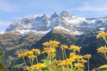 Dents du Midi, Swiss Mountain