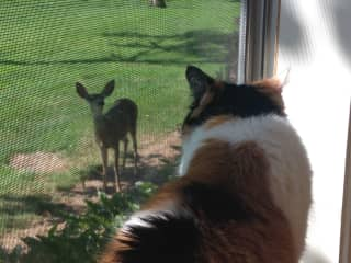 Smora making eye contact with a deer
