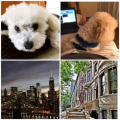 2018 New York City House/Pet sit.. with my pal Seve!