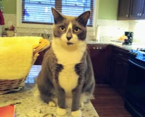 Johnny Mittens - Only has 2 teeth, she was allergic to the tartar on her teeth so they had to be removed.  She is always hungry and you cannot give her too many treats.  She is on a diet.  You absolutely must make sure she does not get near Wednesday!