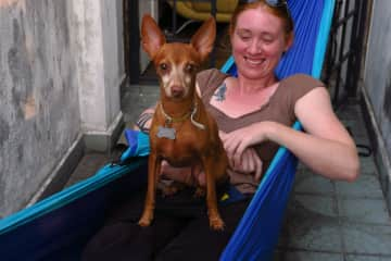 Lap dog, even in a hammock!