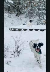 Demelza and Kadan enjoying the snow