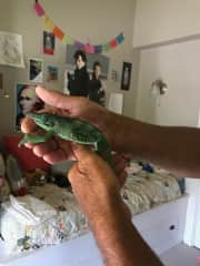 A Lizard .... Yup, we will take care of those too!!