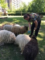 Eric feeding sheep :)