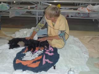 Kathie in the recovery station at volunteer spay/neuter clinic in Boquete, Panama!
