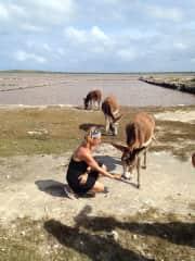 Wild donkeys can't resist carrots