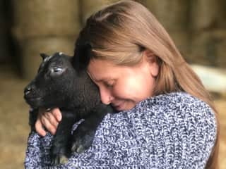 Visiting lambs at a farm in East Sussex England