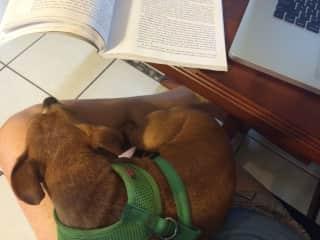 Dog-sitting Loki in Florida, 2017