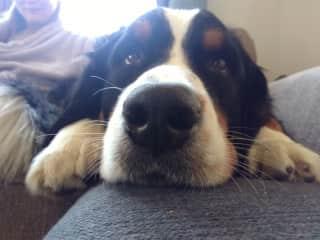 Big nose boy