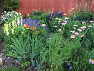 I find joy and relaxation in my garden.