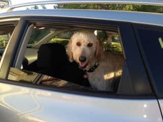 Jax loves car rides