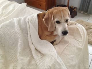 Old dog feeling the cold
