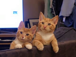 The ninjas as kittens